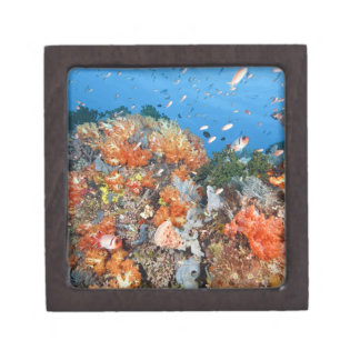 Healthy reef structure, Komodo National Park Keepsake Box