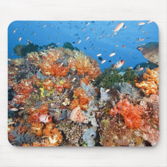 Healthy reef structure, Komodo National Park Mouse Pad