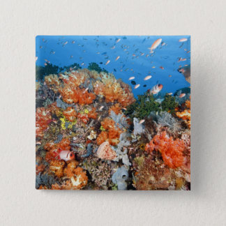 Healthy reef structure, Komodo National Park Pinback Button