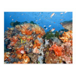 Healthy reef structure, Komodo National Park Postcard