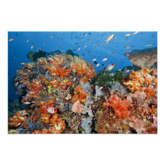 Healthy reef structure, Komodo National Park Poster