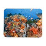 Healthy reef structure, Komodo National Park Rectangle Magnet