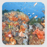 Healthy reef structure, Komodo National Park Square Sticker