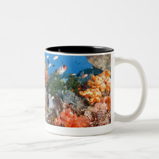 Healthy reef structure, Komodo National Park Two-Tone Coffee Mug
