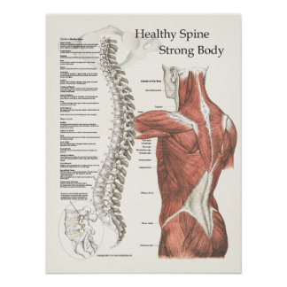 Healthy Spine Strong Body Chiropractic Poster