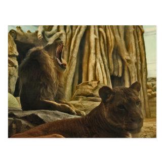 Hear me Roar! Postcard