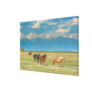 Heard of Horses in Hayfield Canvas Print