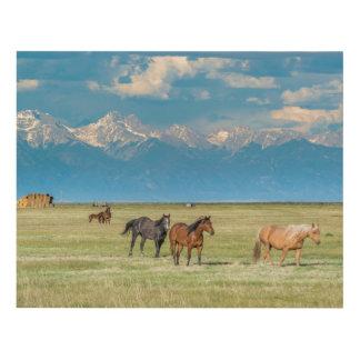 Heard of Horses in Hayfield Panel Wall Art