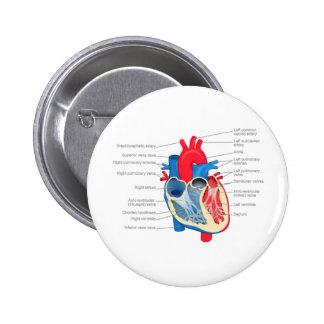 Heart_Anatomy Pin Redondo 5 Cm