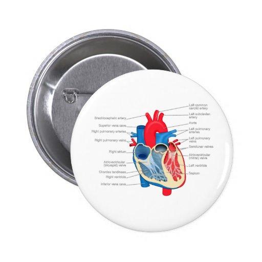 Heart_Anatomy Pin Redondo De 2 Pulgadas
