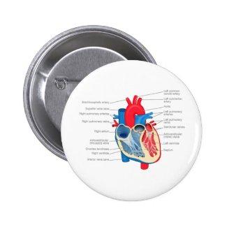Heart_Anatomy Pins