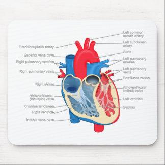 Heart_Anatomy Alfombrilla De Raton