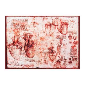Heart And Its Blood Vessels,Leonardo Da Vinci, Red Canvas Print