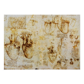 Heart And Its Blood Vessels Poster