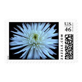Heart and Soul Postage Stamp