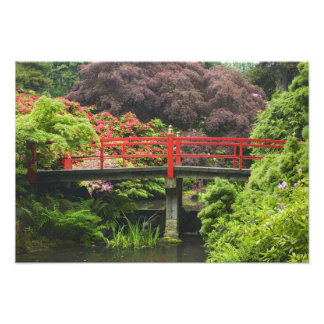 Heart Bridge with blossoming rhododendrons, Photographic Print