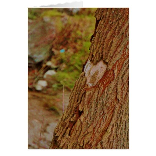 Heart Carved in Tree Greeting Card