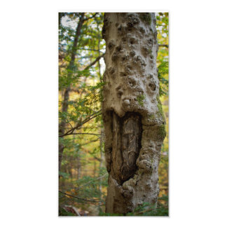 Heart Carved Tree Photographic Print