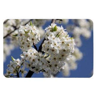 Heart Flowering Tree Magnet