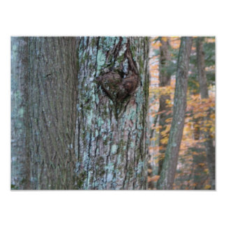 heart in a tree poster