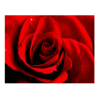 Heart of a Rose Postcard