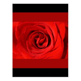 Heart of a Rose Postcard