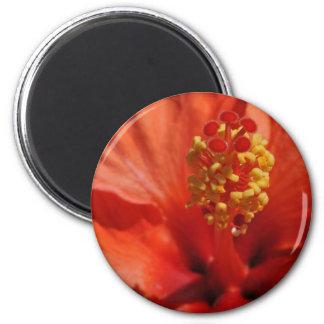 Heart of An Orange Hibiscus Flower 2 Inch Round Magnet