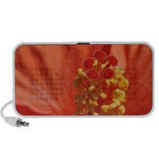 Heart of An Orange Hibiscus Flower iPhone Speaker
