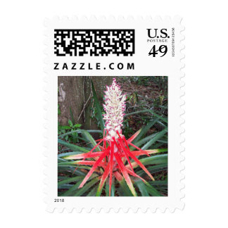 Heart of Flame Bromelia Postage Stamps
