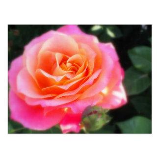 Heart of Gold Rose Postcard