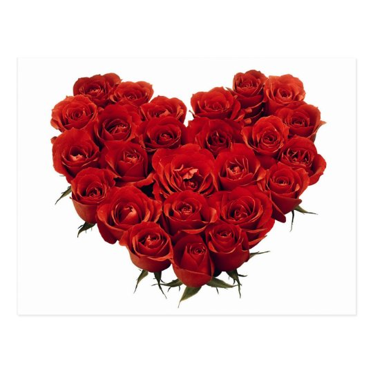 Heart of Red Roses Postcard