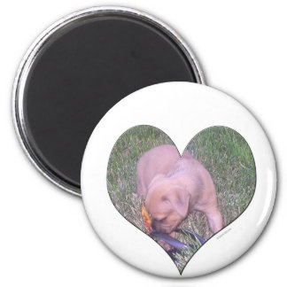 Heart puppy magnet