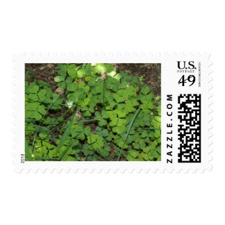 heart shaped clovers 2 stamps