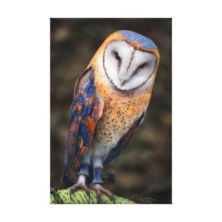 Heart-Shaped Face Barn Owl Canvas Print