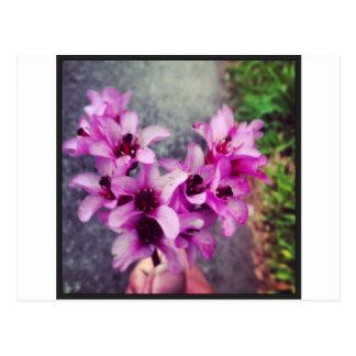 heart shaped flower bouquet postcards