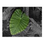 Heart Shaped Green Leaf Postcards
