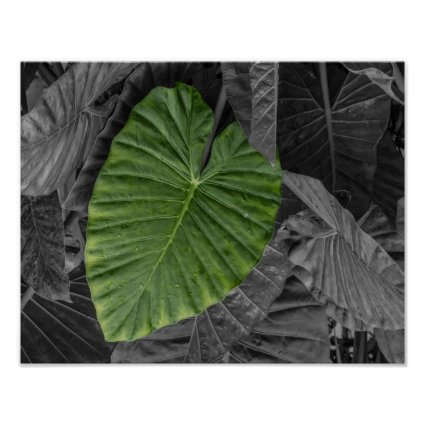 Heart Shaped Green Leaf Poster