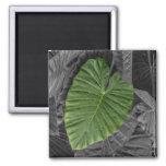 Heart Shaped Green Leaf Refrigerator Magnet