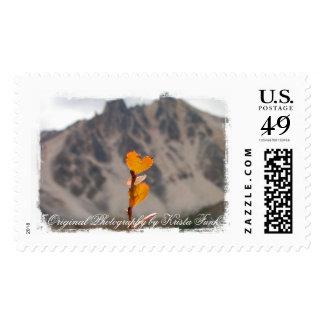 Heart-Shaped Leaf Postage Stamp