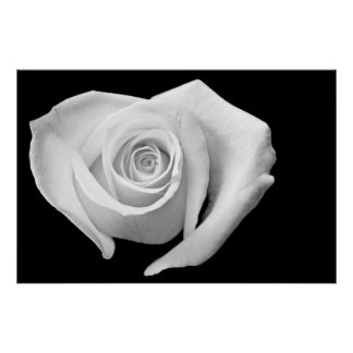 Heart Shaped Rose, Black and White Poster