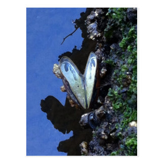 Heart shaped shell postcard