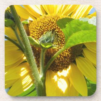 Heart Shaped Sunflower Drink Coaster