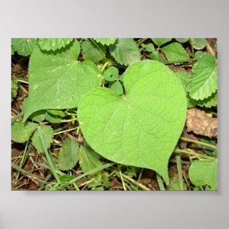 heart shaped vine poster
