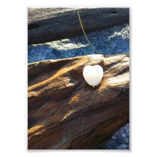 Heart Shell On Wood Photo Print