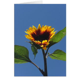 Heart Sunflower Customizable Card