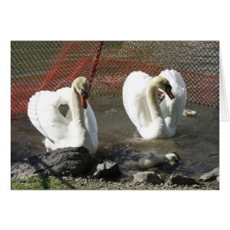 Heart Swans and Babe Greeting Card