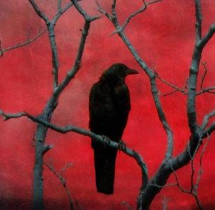 Crow Symbolism Art & Wall Décor | Zazzle