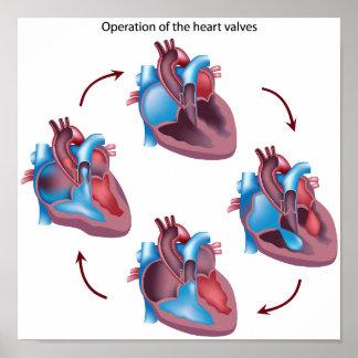Heart valves operation  Poster
