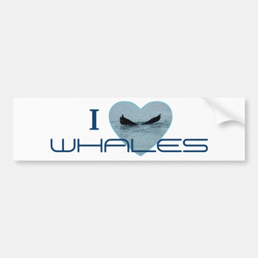 Heart with Whale Tail Photo Bumper Stickers