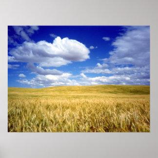 Heartland Wheat Print
